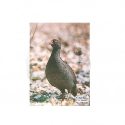 Cible papier francolin